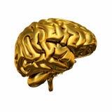 Cerebro humano de oro Imágenes de archivo libres de regalías