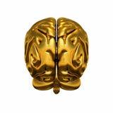 Cerebro humano de oro Foto de archivo