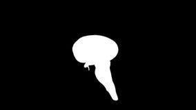 Cerebro humano que monta, lazo inconsútil, Alpha Channel, cantidad común ilustración del vector