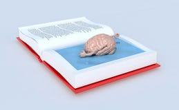 Cerebro humano que nada en el libro Imagen de archivo libre de regalías