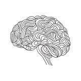 Cerebro humano, vector Imagen de archivo libre de regalías