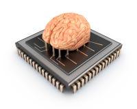 Cerebro humano y chip de ordenador Fotos de archivo libres de regalías