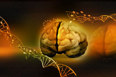 Cerebro humano y DNA Fotos de archivo