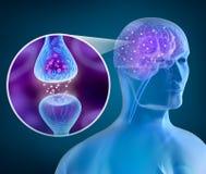 Cerebro humano y receptor activo Imagenes de archivo