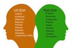 Cerebro izquierdo y cerebro derecho Imágenes de archivo libres de regalías