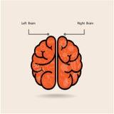Cerebro izquierdo y símbolo del cerebro derecho, muestra de la creatividad, Imagen de archivo libre de regalías