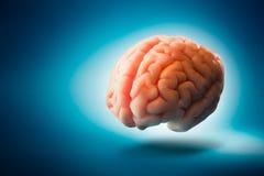 Cerebro que flota en un fondo azul/un foco selectivo Imagen de archivo libre de regalías