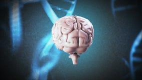 Cerebro que hace girar en fondo de la DNA stock de ilustración
