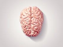 Cerebro tallado Fotos de archivo