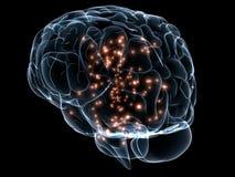 Cerebro transparente humano stock de ilustración