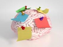 Cerebro y etiquetas engomadas Imágenes de archivo libres de regalías