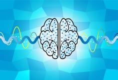 Cerebro y onda Imágenes de archivo libres de regalías
