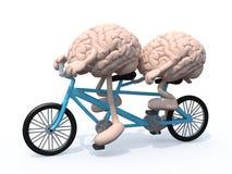 Cerebros que montan la bicicleta en tándem Fotografía de archivo