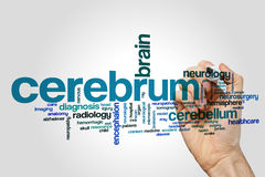 Cerebrum word cloud. Concept on grey background royalty free stock images