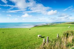 The Ceredigion Coastline in Wales. Sheep grazing in fields on the Ceredigion coast near Aberath in Wales stock photography