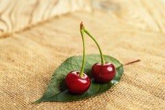 Cereja Cereja vermelha Cerejas doces frescas com gotas da água, fim acima conceito saudável do alimento, foco macio Fotos de Stock Royalty Free