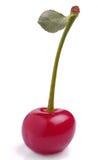 Cereja com folha pequena Foto de Stock