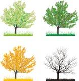 Cereja da árvore em quatro estações ilustração do vetor