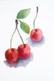 Cereja da aguarela ilustração royalty free
