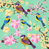 A cereja da flor floresce o teste padrão do ramo e dos pássaros Ilustrações do fundo da textura da mola ilustração do vetor