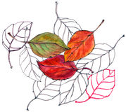 Cereja da folha, aquarela, teste padrão ilustração royalty free