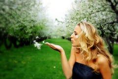 Cereja da primavera Foto de Stock