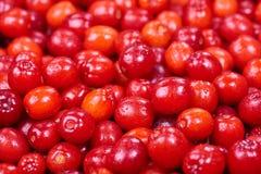 Cereja de cornalina madura Imagem de Stock Royalty Free
