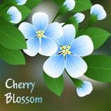 Cereja de florescência Flores azuis em um ramo com folhas verdes e no lugar para o texto Vetor Fotos de Stock
