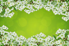 Cereja de florescência Fundo brilhante fotografia de stock royalty free