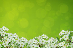 Cereja de florescência Fundo brilhante foto de stock
