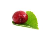 Cereja doce na folha foto de stock royalty free
