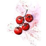 Cereja dos tomates da aquarela com o backgrou do branco do ponto e do splashon Fotos de Stock