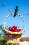 A cereja está em uma cesta está pendurando no pregador de roupa Imagem de Stock