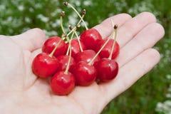 A cereja está na mão Fotografia de Stock Royalty Free