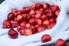 Cereja fresca sobre em uma cobertura branca em um fundo do banco de madeira Cerejas maduras frescas Cerejas doces Imagens de Stock