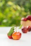 Cereja pequena do fruto brasileiro orgânico do Acerola fotos de stock royalty free