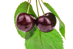 Cereja preta saboroso com laeves Fundo Fotografia de Stock
