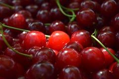 Cereja vermelha doce Imagem de Stock Royalty Free