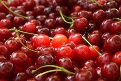 Cereja vermelha doce Foto de Stock Royalty Free