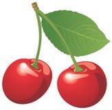 Cereja vermelha isolada no branco Foto de Stock