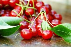 Cerejas ácidas orgânicas Fotografia de Stock Royalty Free