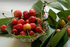 Cerejas - bacia completa de cerejas, fresco e suculento Foto de Stock
