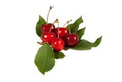 Cerejas bonitas e saborosos Fotografia de Stock Royalty Free