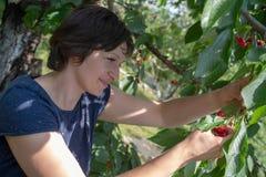Cerejas da colheita da mulher fotografia de stock royalty free