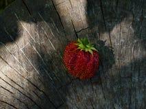 Cerejas doces do grupo em uma superfície de madeira Fotografia de Stock Royalty Free