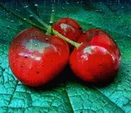 Cerejas doces na folha da uva foto de stock royalty free
