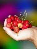Cerejas doces na palma Imagens de Stock Royalty Free