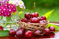 Cerejas e flores Imagens de Stock