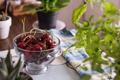 Cerejas ecológicas na bacia de vidro, na tabela Foto de Stock Royalty Free