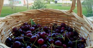 Cerejas em uma cesta Fotografia de Stock
